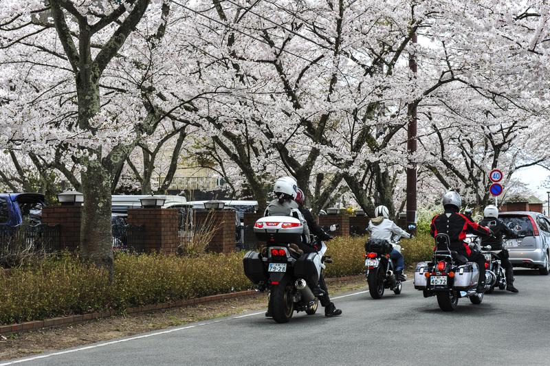 海津大崎 湖岸の桜  2014 0413_d0246136_18122678.jpg