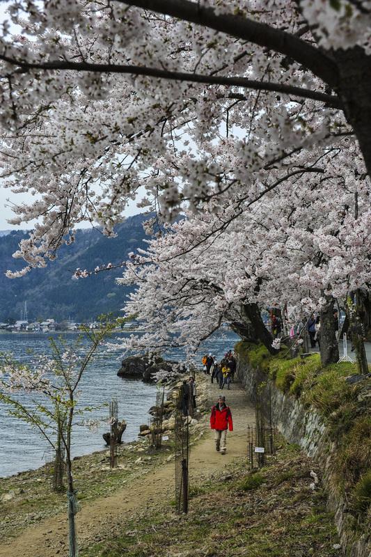 海津大崎 湖岸の桜  2014 0413_d0246136_18134698.jpg