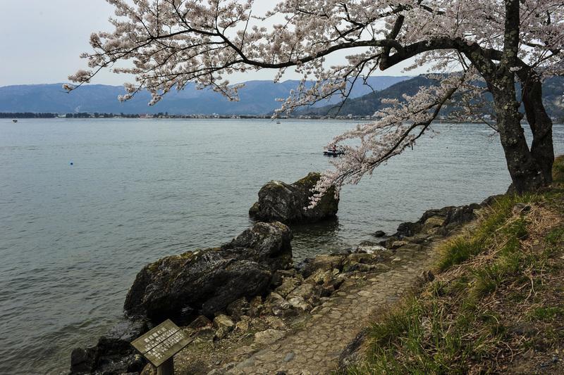 海津大崎 湖岸の桜  2014 0413_d0246136_1814426.jpg
