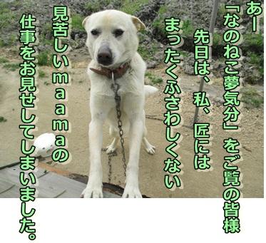 b0151748_11334662.jpg