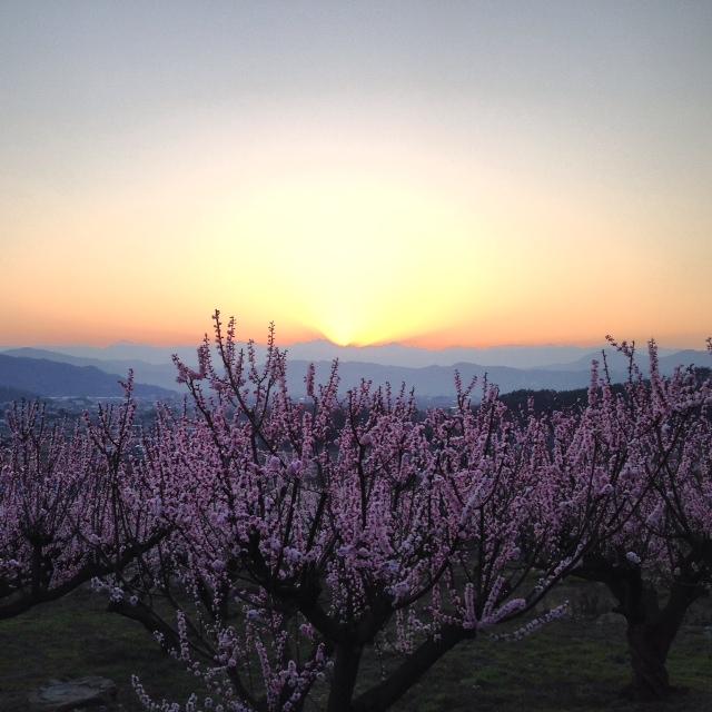 あんずの花と夕日を眺める。_f0320754_9104632.jpg