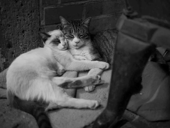 ふみきコラム 猫のはなし_c0177665_15551065.jpg