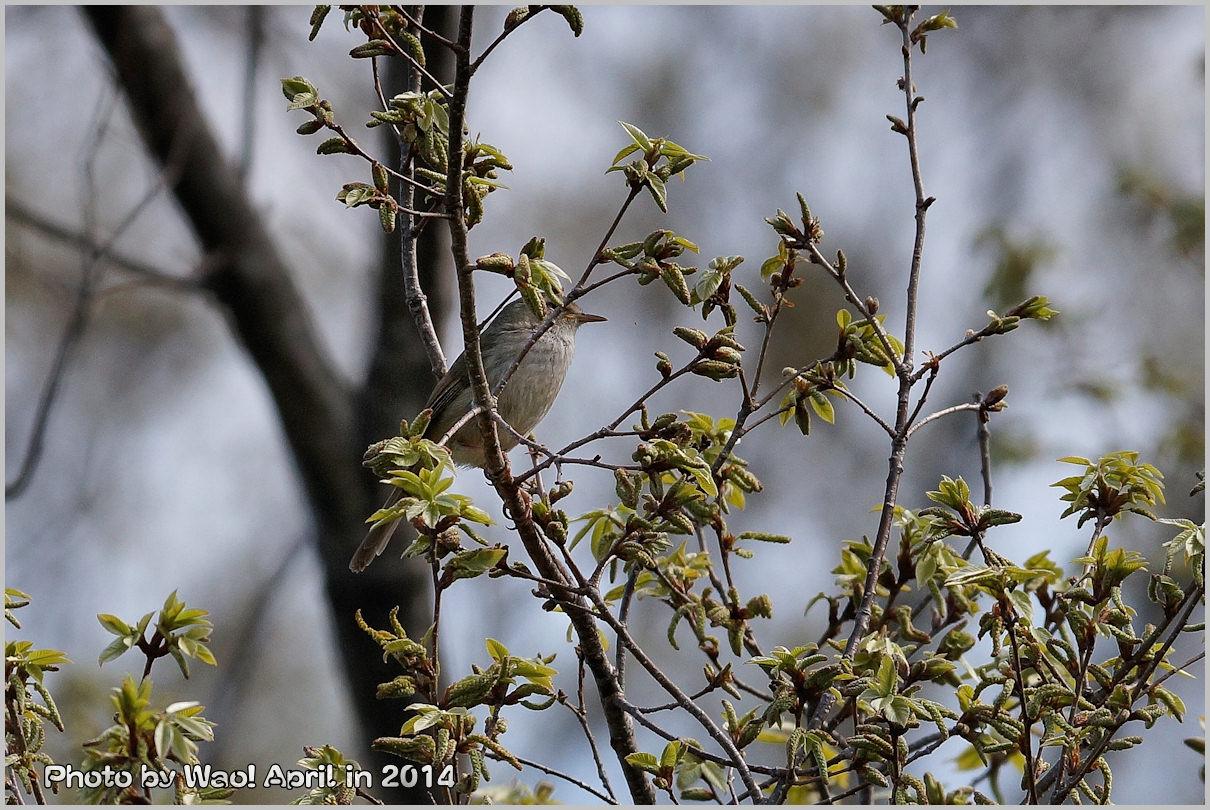 湿原の春 ハルリンドウ他・・・_c0198669_21564722.jpg