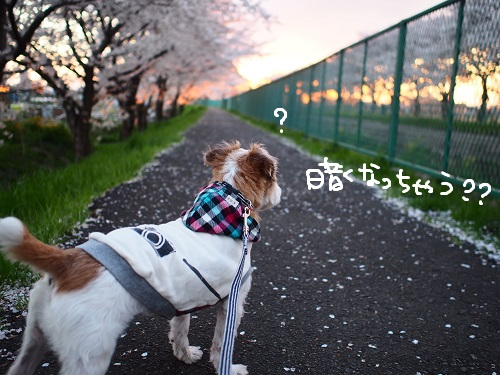 b0092580_1442279.jpg