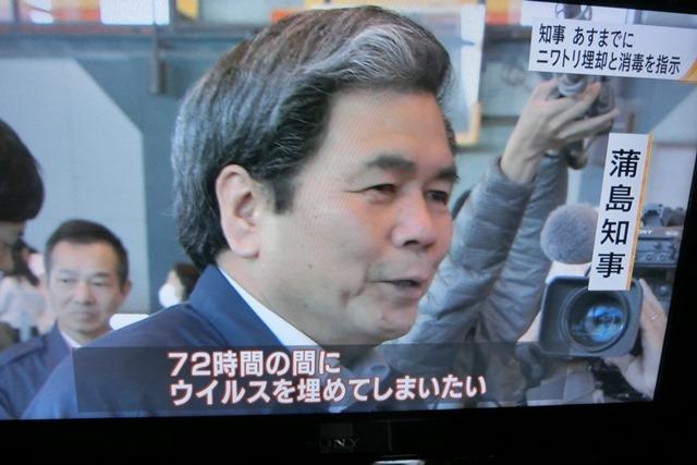 熊本県多良木町で鳥インフルエンザが発生、子豚の赤ちゃんが病原菌PDEに襲われる、STAP細胞に期待_d0181492_91818.jpg