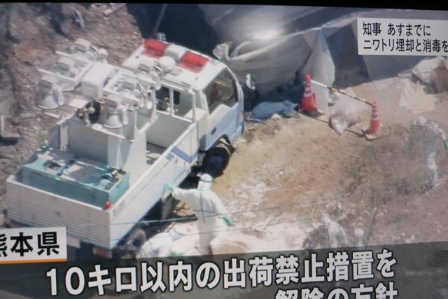 熊本県多良木町で鳥インフルエンザが発生、子豚の赤ちゃんが病原菌PDEに襲われる、STAP細胞に期待_d0181492_919331.jpg