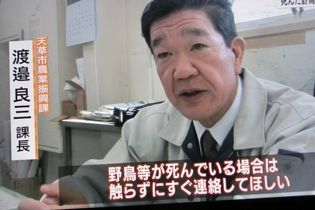 熊本県多良木町で鳥インフルエンザが発生、子豚の赤ちゃんが病原菌PDEに襲われる、STAP細胞に期待_d0181492_9194252.jpg