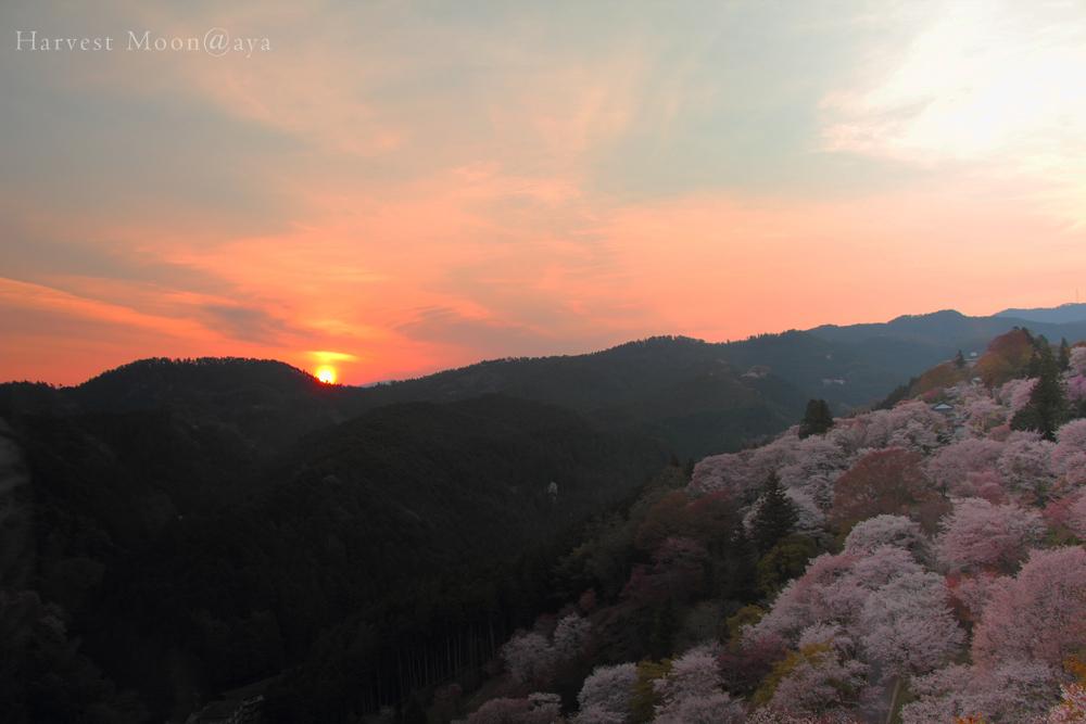 桜の詩~夜明け色_b0208495_21445160.jpg