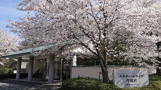 『ホーム自慢の桜』<エスティームライフ学園前>_c0107602_10464990.jpg
