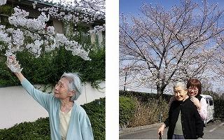 『ホーム自慢の桜』<エスティームライフ学園前>_c0107602_10492115.jpg