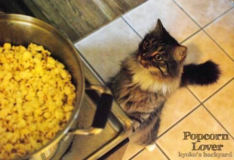 ポップコーン好きな猫の、そわそわ度_b0253205_412681.jpg