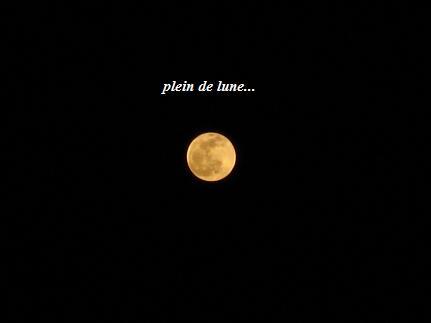 柔らかな透明感☆デルフィニウムトリックブルーと、幻想の月☆_c0098807_1444522.jpg