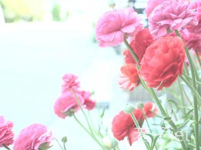 b0120108_15541167.jpg