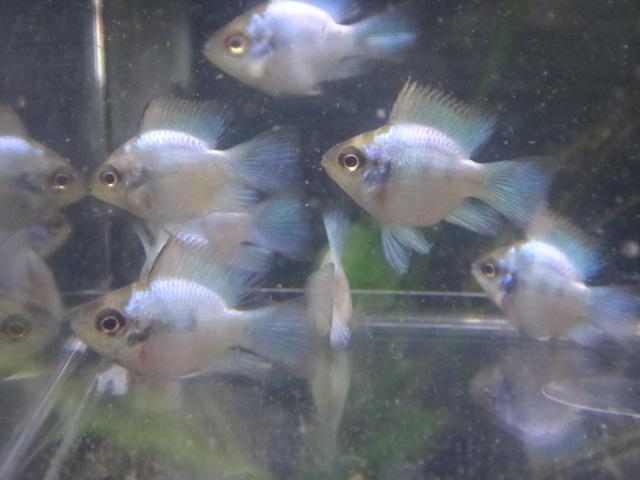 140417 熱帯魚・水草_f0189122_1320283.jpg