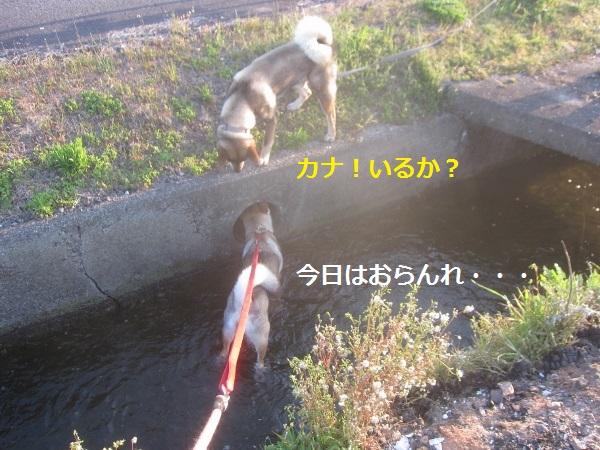 f0143123_09493847.jpg