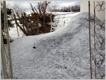 雪がまだある。。_e0326953_2113577.jpg