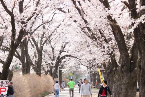桜_b0129362_21575299.jpg