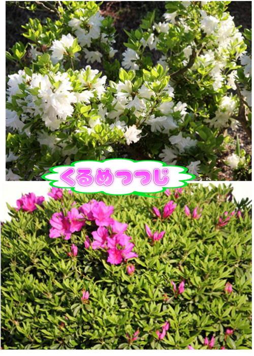 f0003174_1329591.jpg