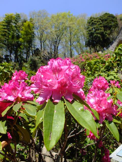 4月15日 七沢森林公園 そのⅠ_e0145782_637426.jpg