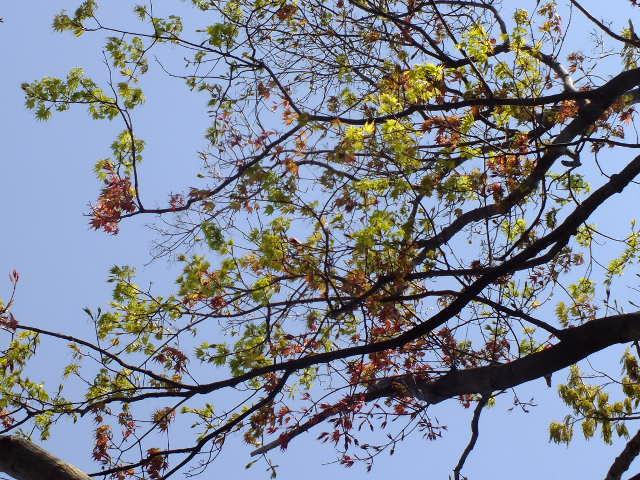 4月15日 七沢森林公園 そのⅠ_e0145782_6425878.jpg