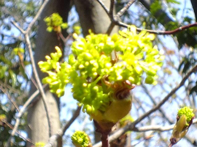4月15日 七沢森林公園 そのⅠ_e0145782_6432641.jpg