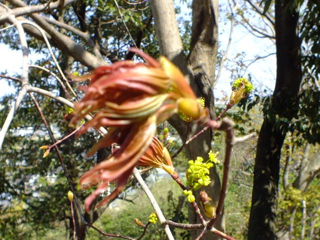 4月15日 七沢森林公園 そのⅠ_e0145782_6442057.jpg