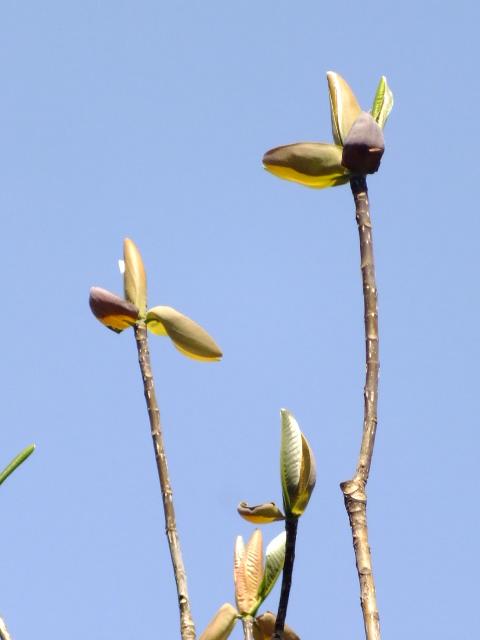 4月15日 七沢森林公園 そのⅠ_e0145782_645013.jpg