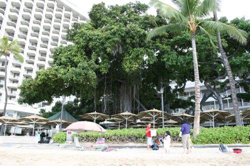 旅日記 HAWAII 2011 No8 最終日 モアナサーフライダー朝食_f0059796_15311954.jpg