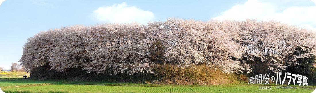 Love・桜パノラマ_c0210599_13365.jpg