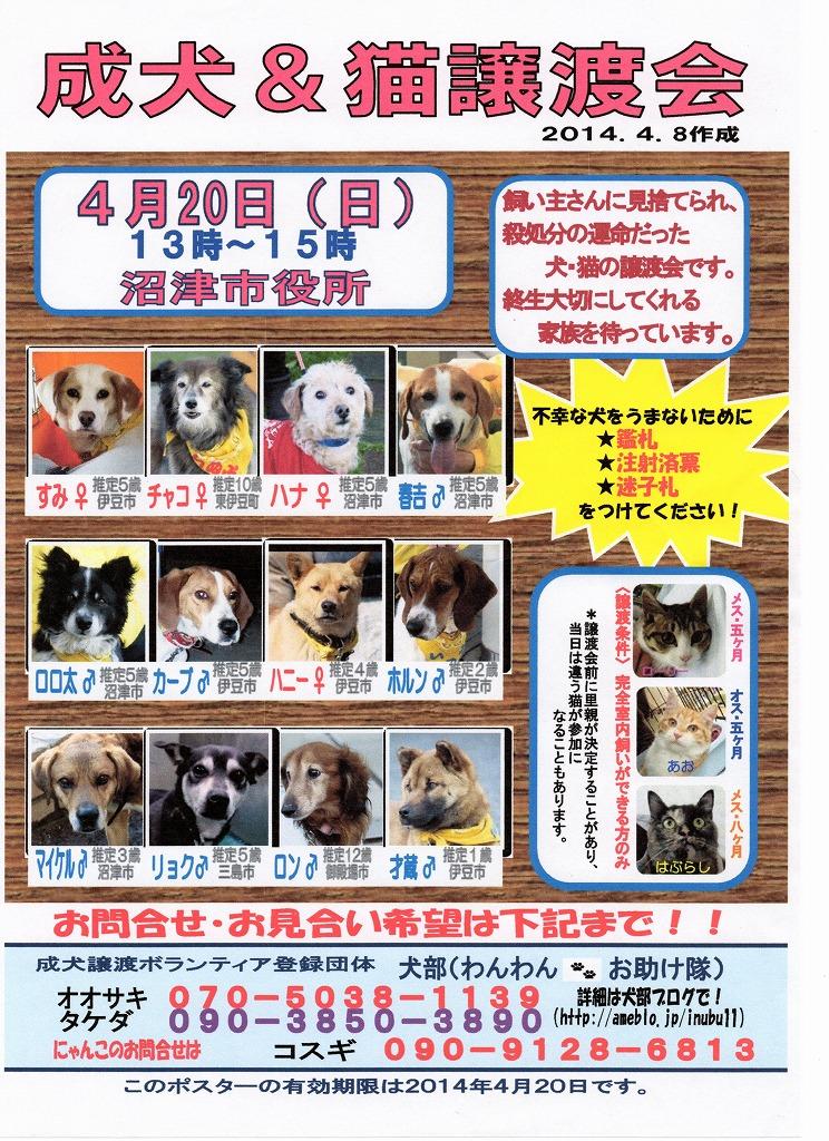 沼津市役所成犬譲渡会やります!_d0050503_12585142.jpg