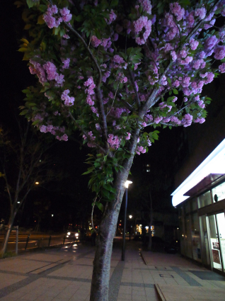 昨日の散歩_b0310424_12015331.jpg