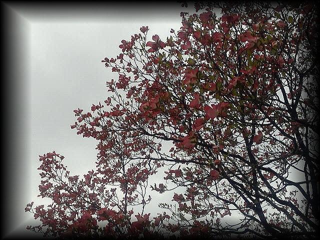 「 雨だけど 雨も悪くない そんな 金曜日・・・ 」_b0133126_18151913.jpg