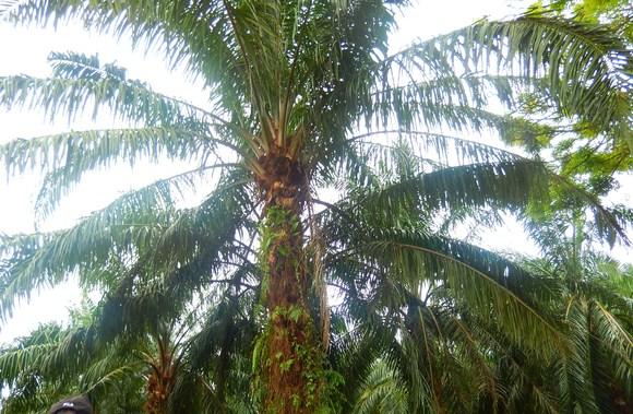 雨なので...マレーシア写真で_b0137932_22144267.jpg