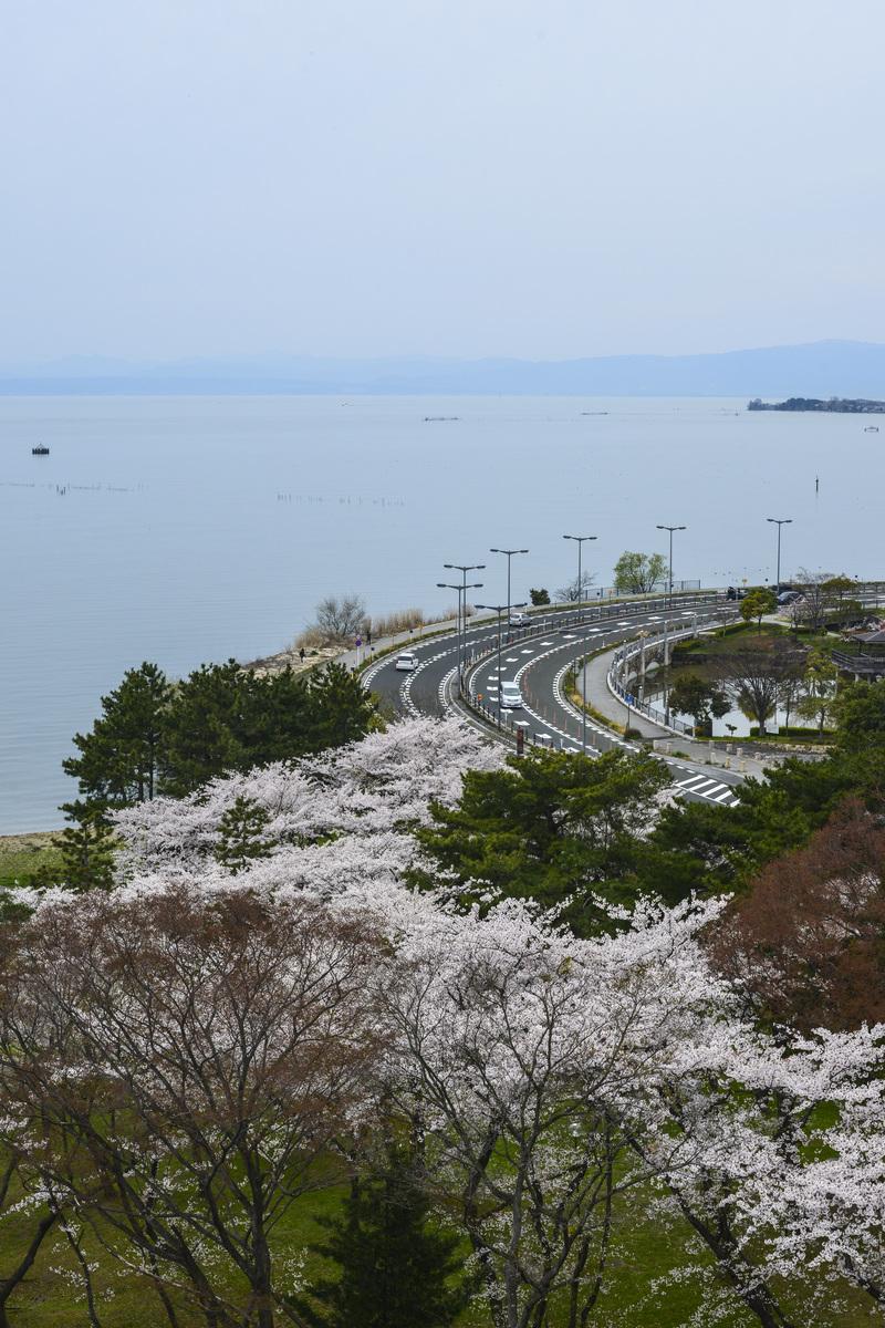 長浜城 天守より 桜花を望む  2014 0413_d0246136_18303817.jpg