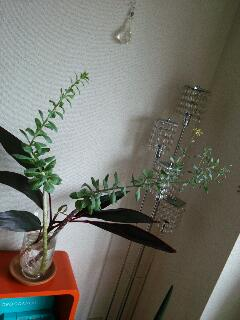 Fioritaは開花・花飾り_f0008555_16322257.jpg