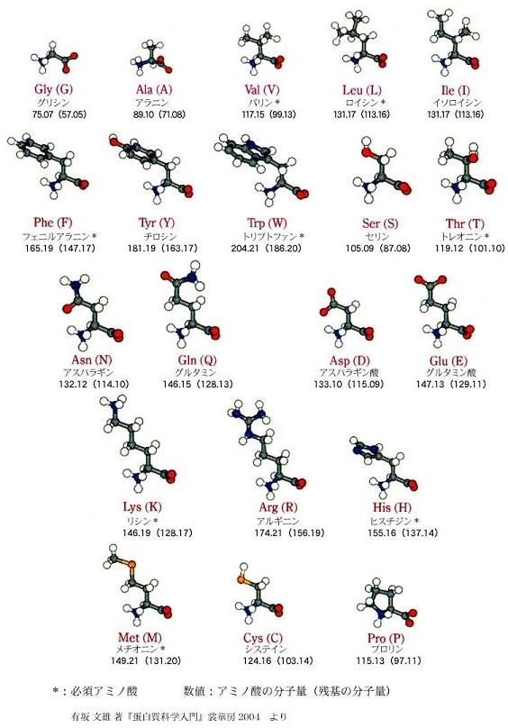 ヒトの必須アミノ酸9種類 collection 827_a0046462_17413744.jpg