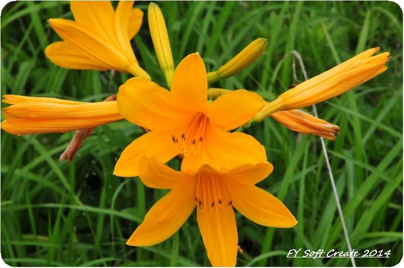 ◆ ニッコウキスゲ咲き乱れる「雄国沼」へ (2009年7月)_d0316868_8574633.jpg