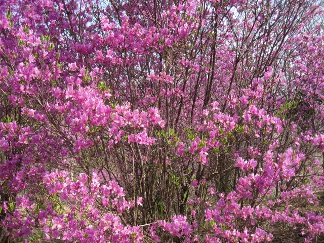 こんなに咲いています_f0085369_16174689.jpg