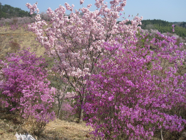 こんなに咲いています_f0085369_1618855.jpg