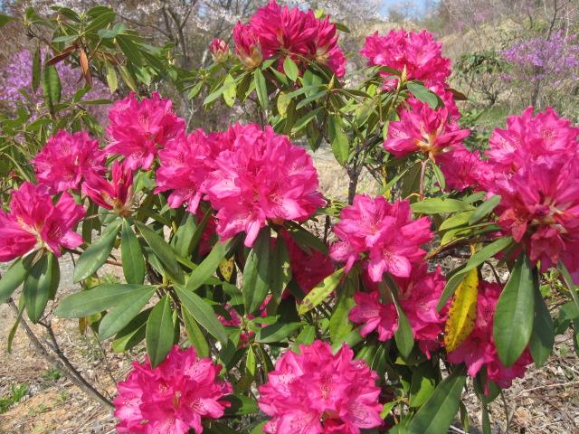 こんなに咲いています_f0085369_16223033.jpg