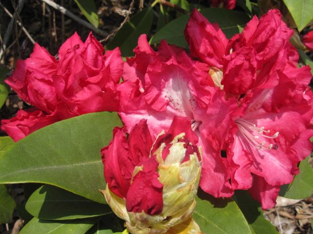 こんなに咲いています_f0085369_16224691.jpg
