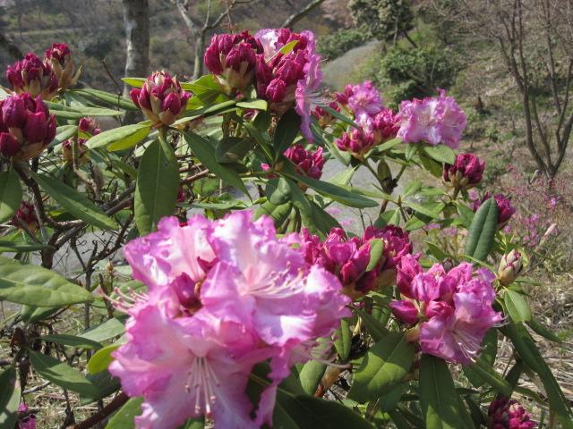 こんなに咲いています_f0085369_1622720.jpg