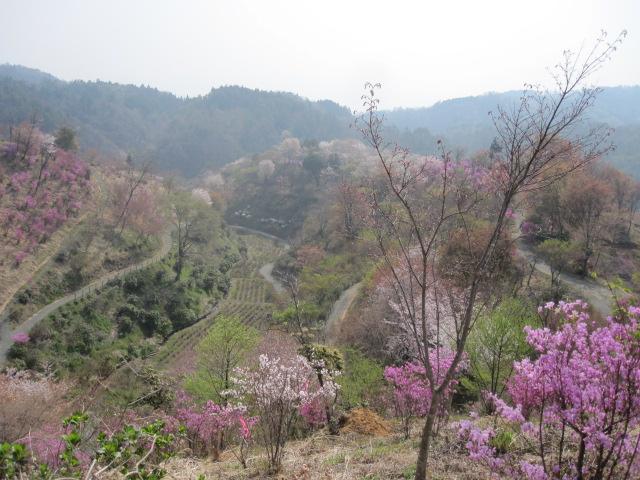 園は 桃源郷・・・_f0085369_16291132.jpg