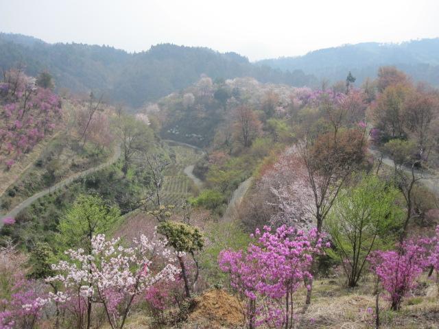 園は 桃源郷・・・_f0085369_16304646.jpg