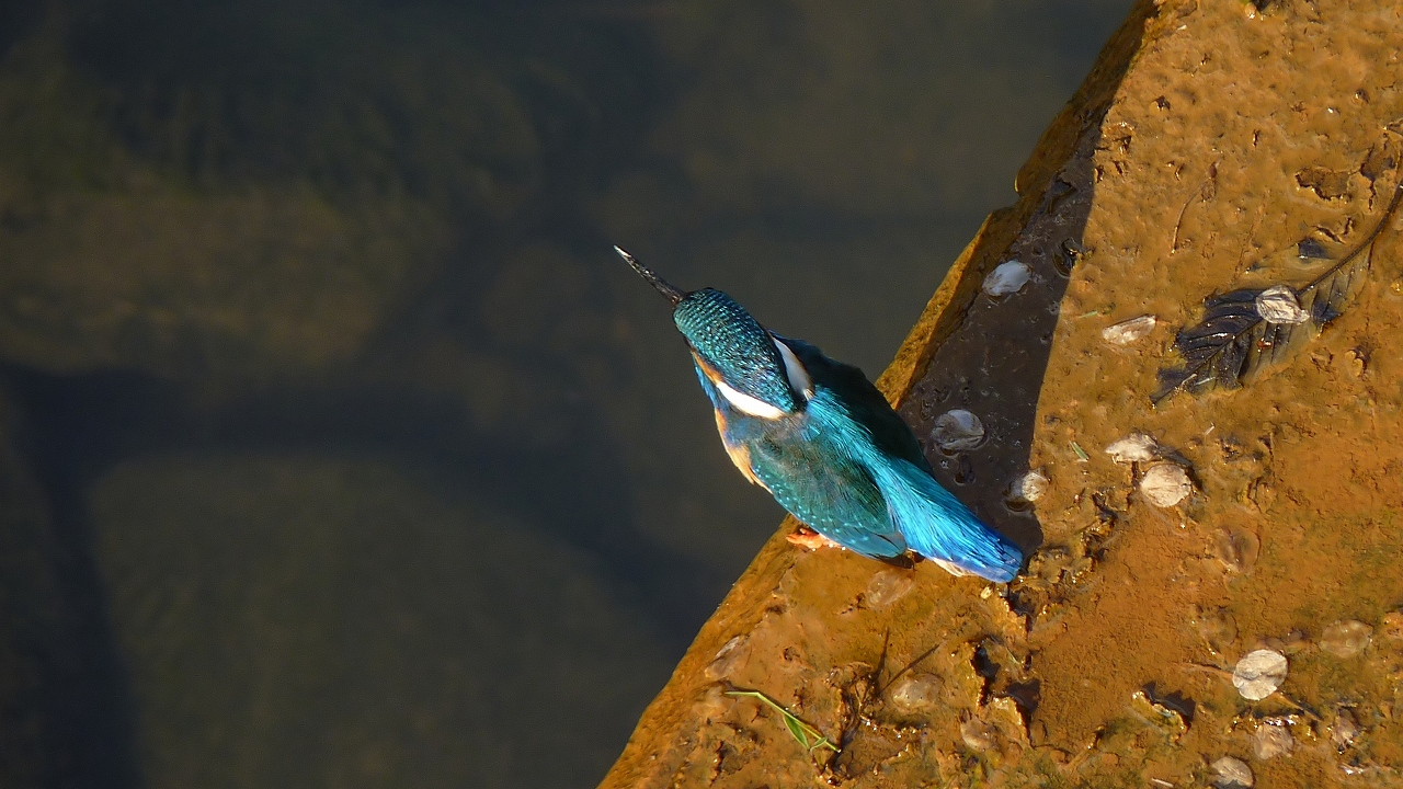 小鮒釣りし彼の川 (ヘルパー編)_a0185081_20363183.jpg