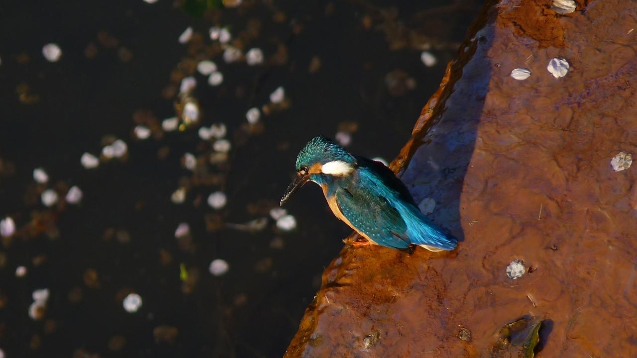 小鮒釣りし彼の川 (ヘルパー編)_a0185081_2037825.jpg
