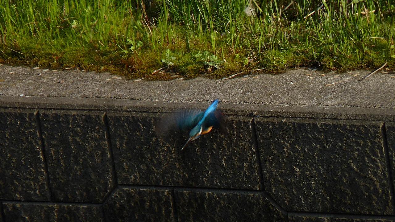 小鮒釣りし彼の川 (ヘルパー編)_a0185081_2038061.jpg