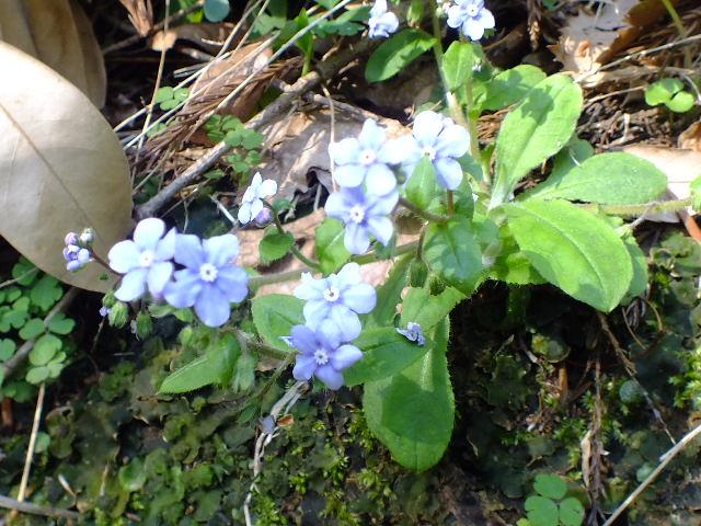 4月15日 七沢森林公園 その2_e0145782_1471090.jpg