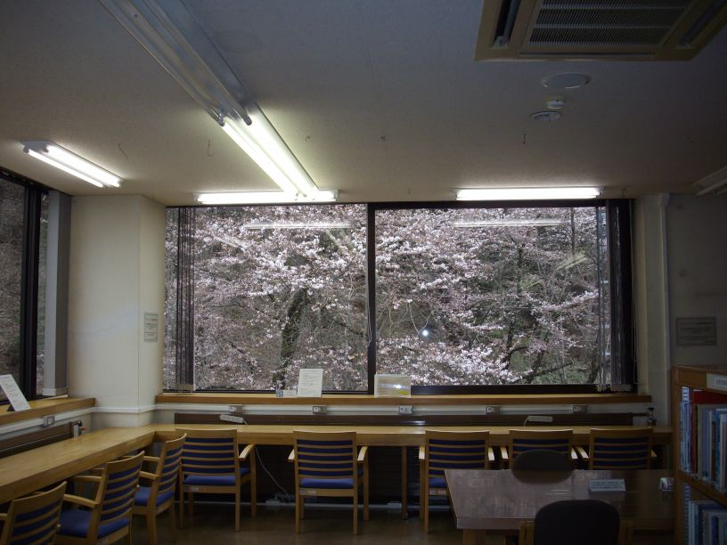 桜の額縁_b0329588_16081632.jpg