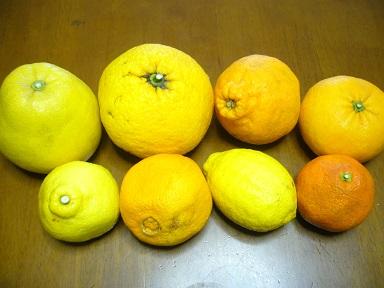 謎の柑橘類_a0264589_1449517.jpg